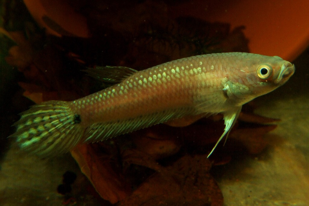 Pin betta fish care water temp betty boop wallpaper free for Betta fish water temp